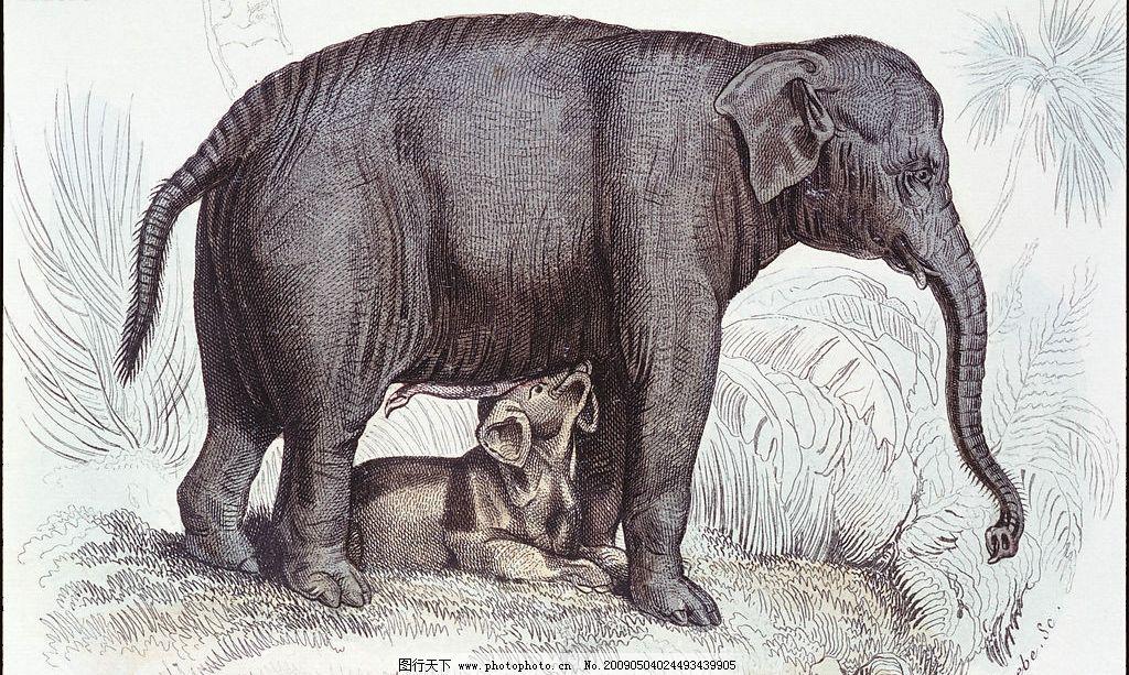 大象 动物 野生动物 高清动物图片素材 动物绘画 生物世界 设计图库