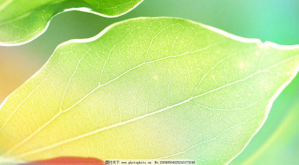树叶 彩色树叶 七彩树叶 阳光 七色光