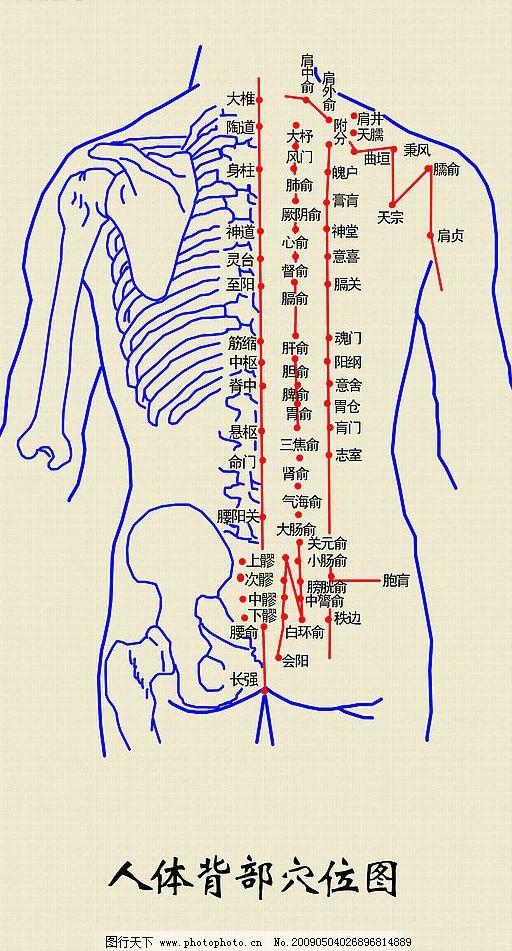 人体背部穴位图 经络 穴位