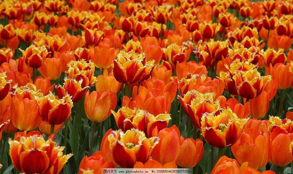 春天百花图片