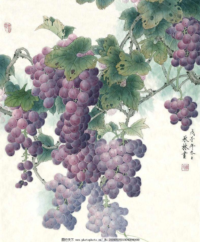 工笔紫葡萄 紫葡萄 文化艺术 绘画书法 设计图库 200dpi jpg