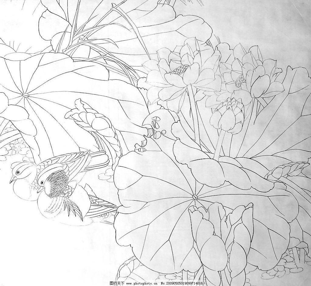 荷花白描 荷花 水草 池塘 文化艺术 绘画书法 设计图库 72dpi jpg