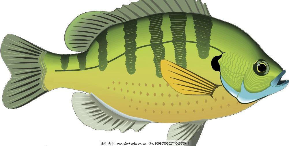 鱼儿 鱼 生物世界 海洋生物 矢量图库 wmf
