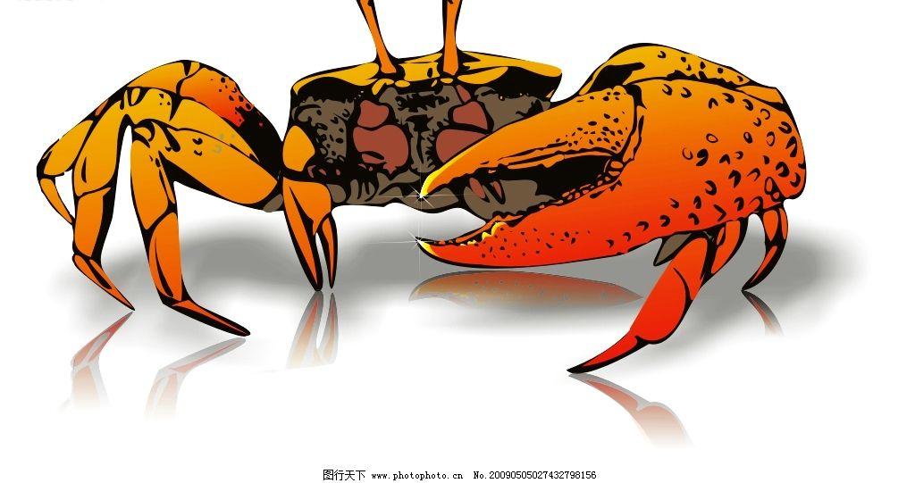螃蟹 矢量 大闸蟹 河蟹 海蟹 海洋生物 生物世界 矢量图库 cdr