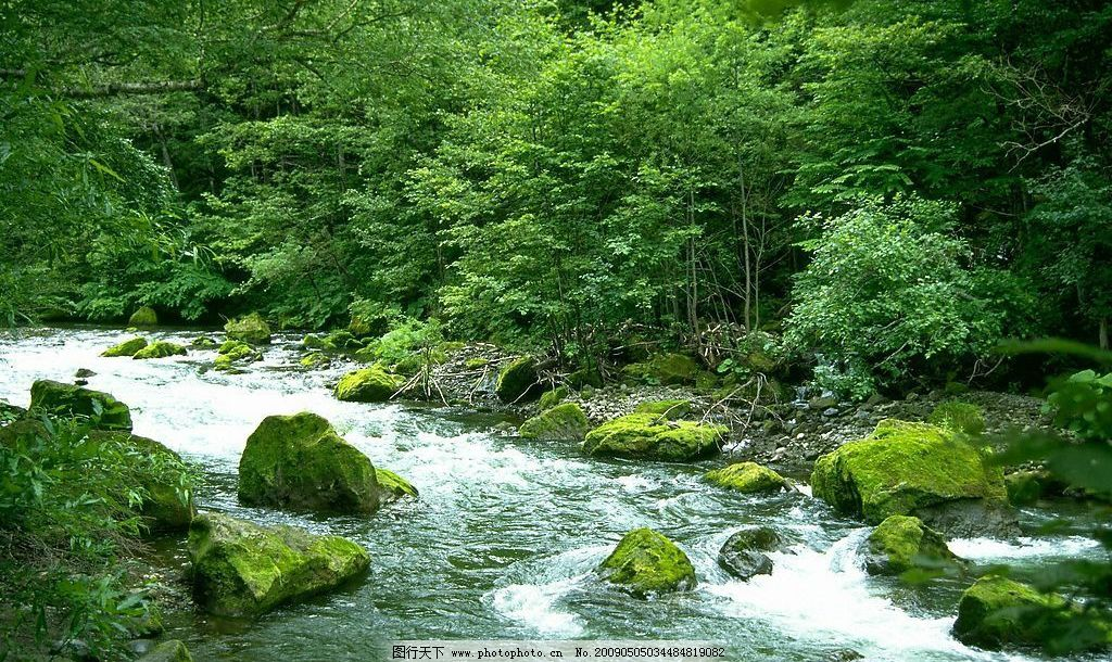 潺潺小溪 林中小溪 自然景观 山水风景 摄影图库 72dpi jpg