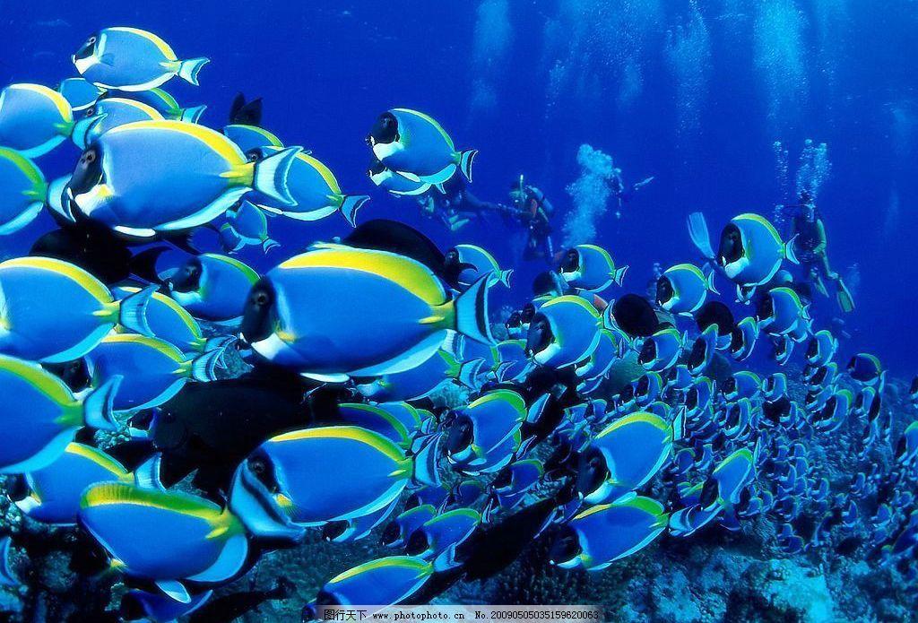 海底世界 海滨 大海 鱼类 生物世界 海洋生物 摄影图库