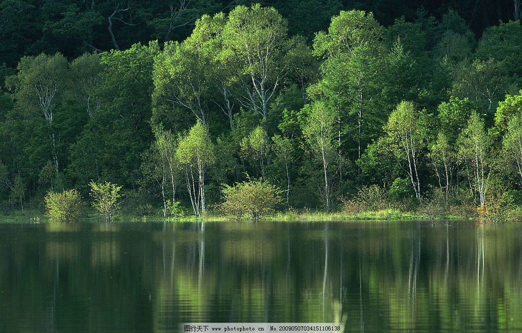 树林 湖水 倒影 旅游摄影 自然风景 摄影图库 350dpi jpg