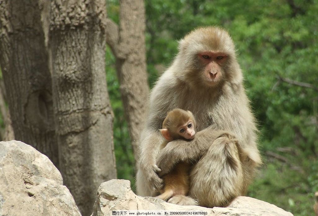 亲密的母子俩 猴子 母猴 动物 大自然 自然风光 旅游 旅游摄影 自然风