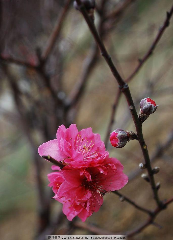 桃花 七星岩桃花岛 旅游摄影 自然风景 摄影图库