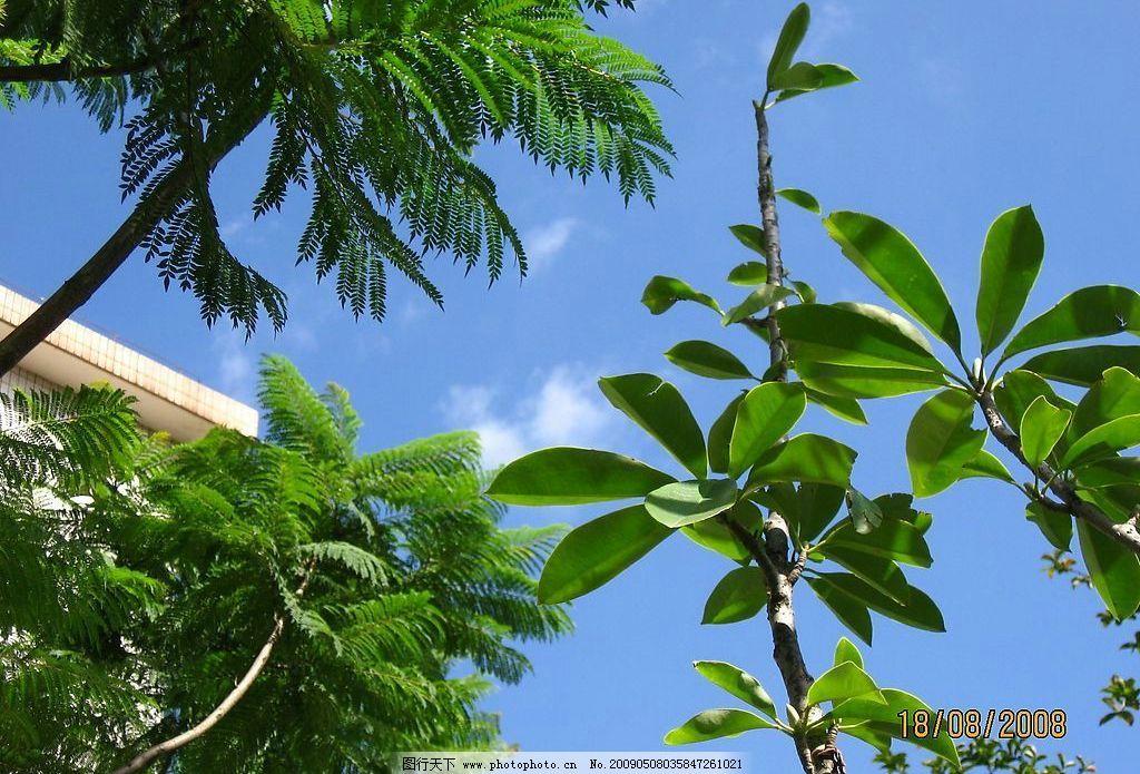 树木 树叶 叶子 叶脉 绿色 自然 树枝 自然景观 自然风景 摄影图库 生