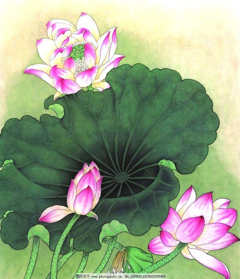 花卉画谱 工笔画线描 茶花篇 菊花篇 牡丹篇 荷花篇 近代绘画 现代会