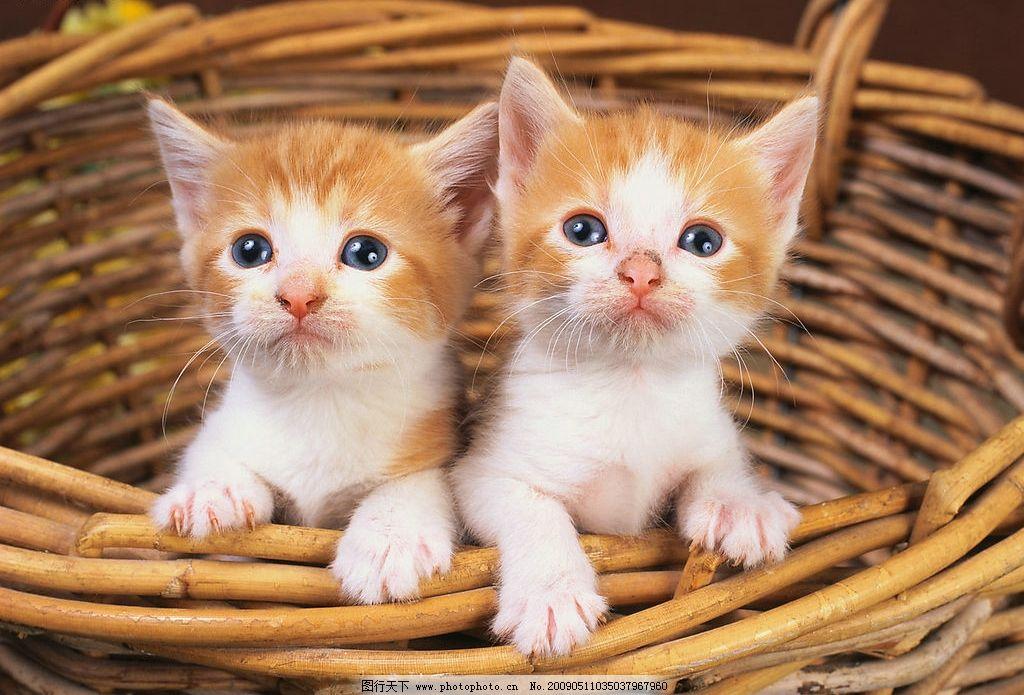 小猫 猫 生物世界 野生动物 摄影图库 300dpi jpg