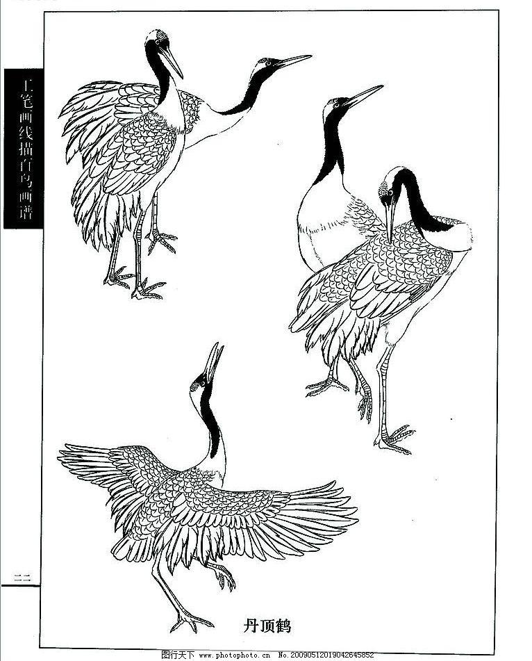 白描 仙鹤 文化艺术 绘画书法 设计图库 72dpi jpg