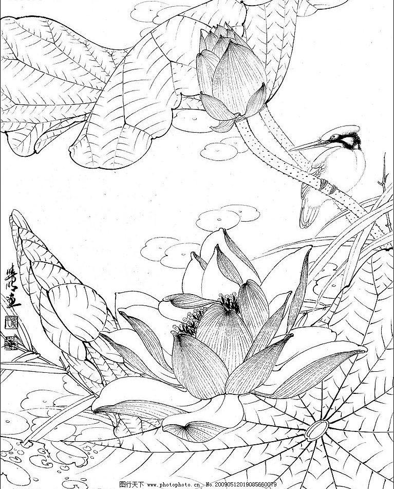 工笔白描 荷花 翠鸟 文化艺术 绘画书法 设计图库 300dpi jpg
