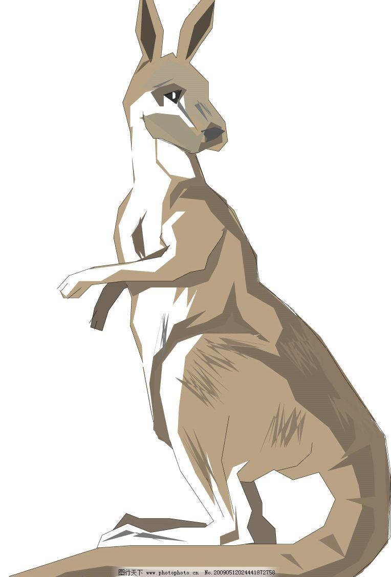 袋鼠 生物世界 野生动物