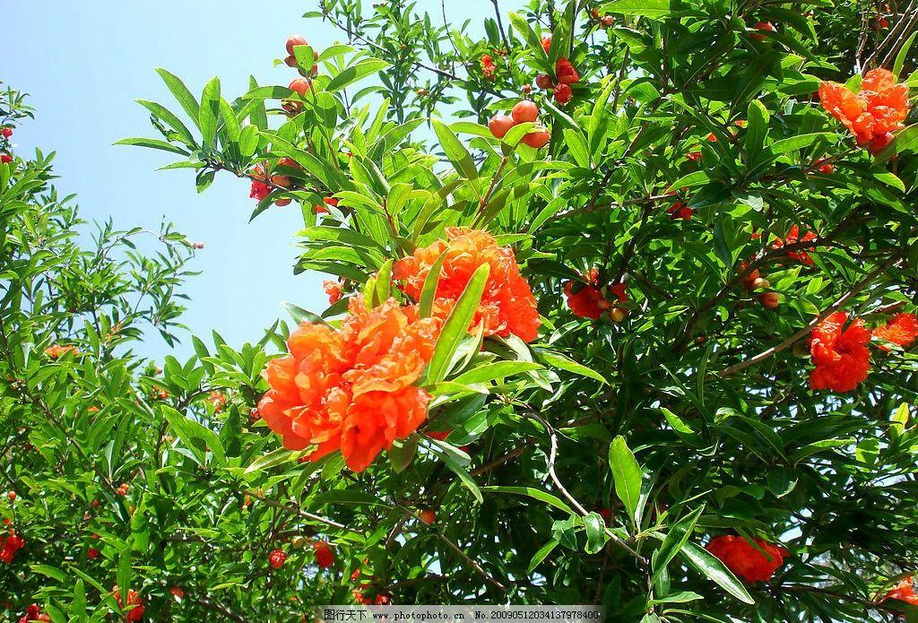 花卉植物图片_自然风景_旅游摄影_图行天下图库