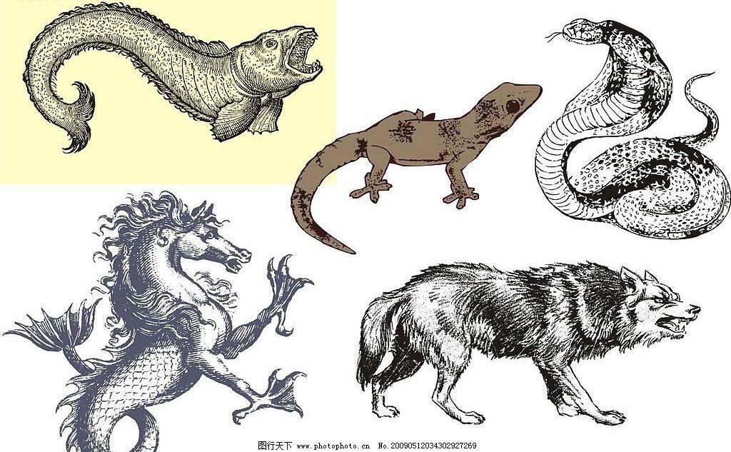 一些凶猛动物图片
