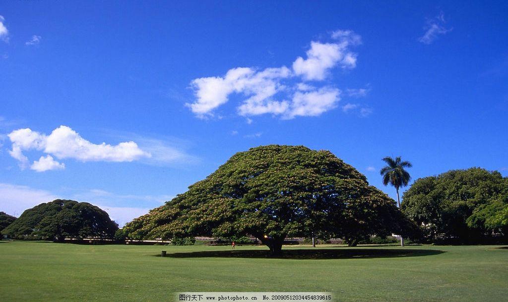 蓝天白云 白云 树木 草坪 自然景观 山水风景 摄影图库 350dpi jpg