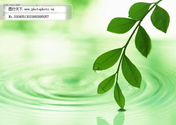 背景 壁纸 绿色 绿叶 设计 矢量 矢量图 树叶 素材 植物 桌面 604_428