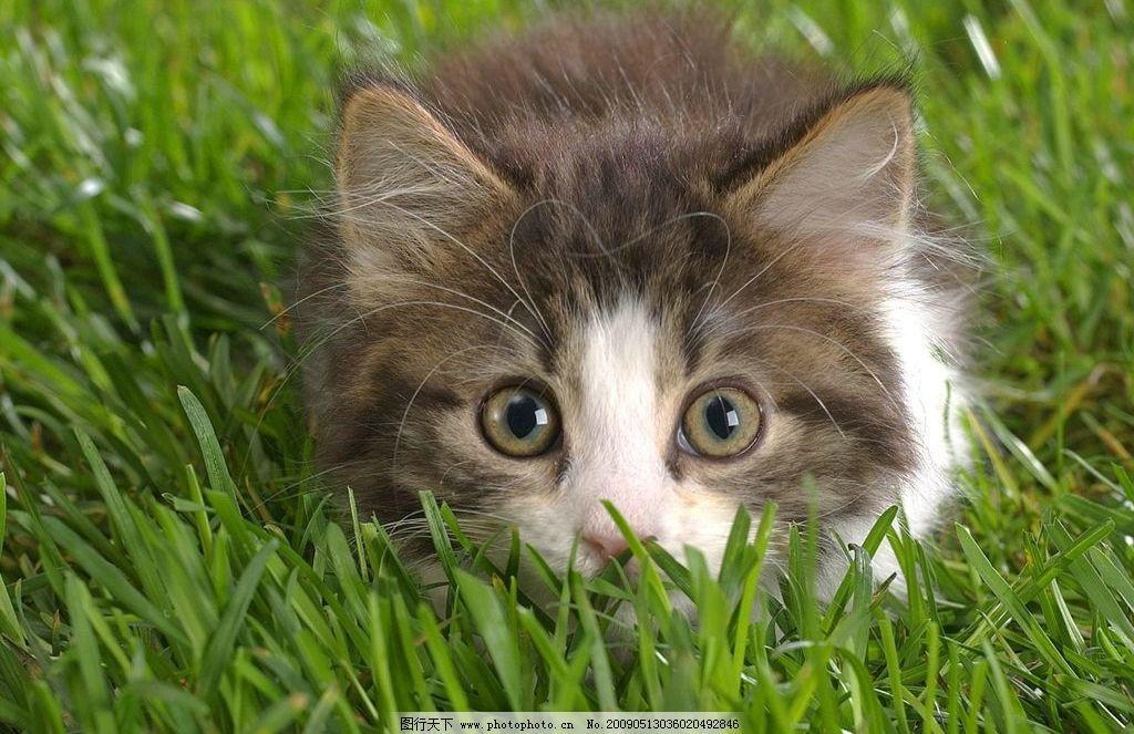 可爱的小猫咪 草地 猫 小猫 可爱 小动物 生物世界 其他生物 摄影图库