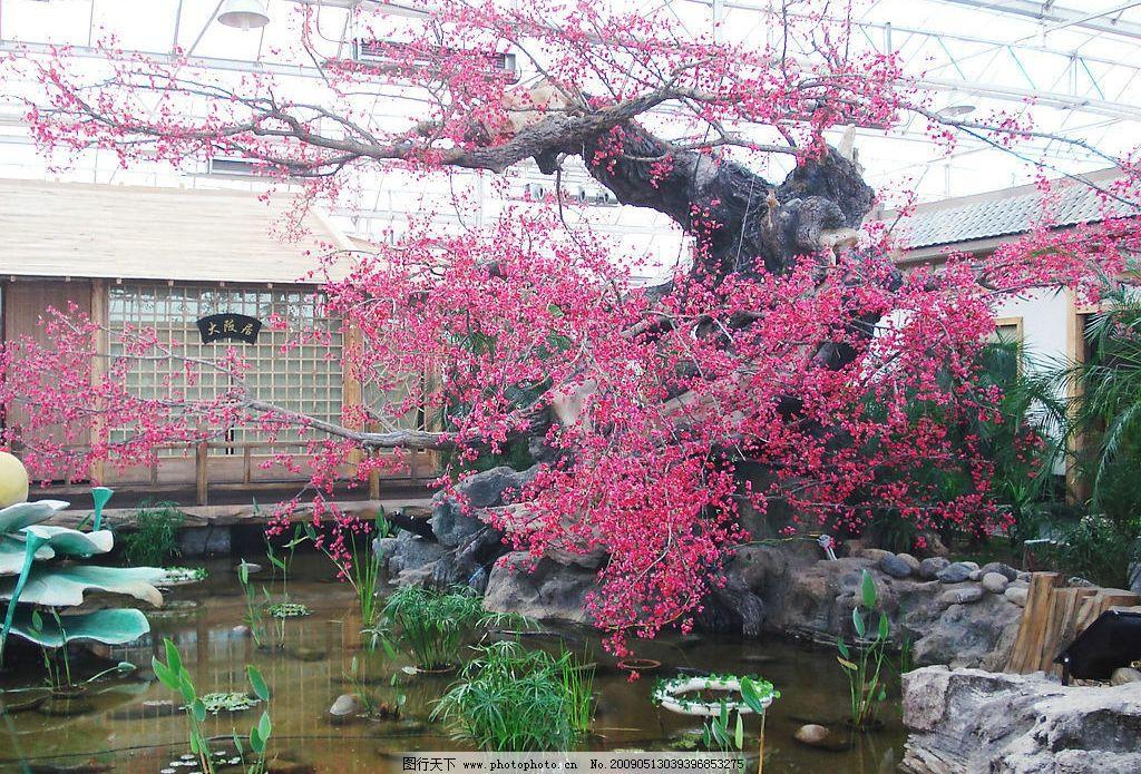 生态园 杏花 杏树 雕花 艺术 室内风景 建筑园林 室内摄影 摄影图库