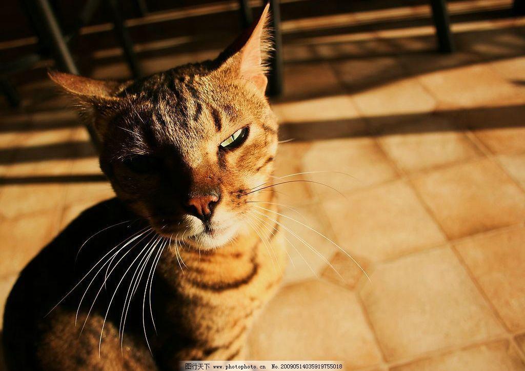 阳光下屋内的猫 猫 动物摄影