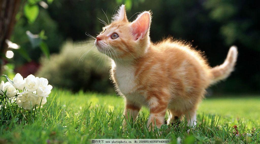 猫猫 动物 生物 自然 可爱 草地 狗 盘子 猫 宠物 生物世界 家禽家畜