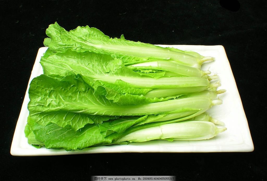 小白菜 蔬菜 绿色 新鲜 盘子 食物 原料 素材 餐饮美食 食物原料 摄影