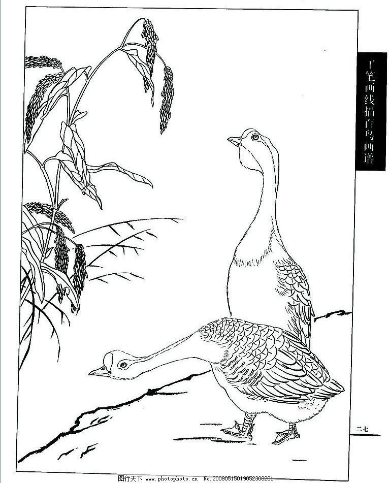 白描菊花 白描 菊花 叶子 绘画书法 文化艺术 设计 300dpi jpg