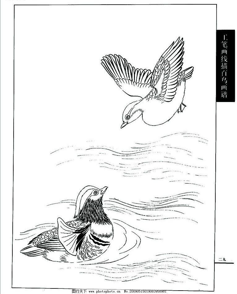 白描 池塘 鸳鸯 文化艺术 绘画书法 设计图库 72dpi jpg