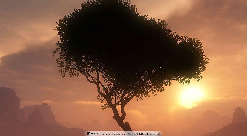 阳光树木图片