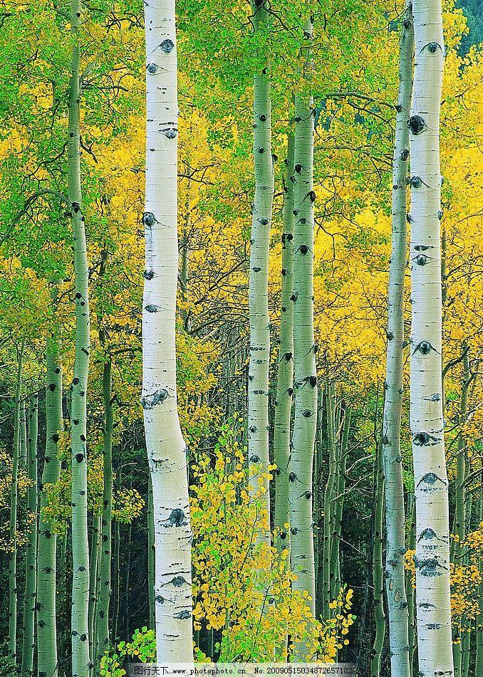 树林 茂密的树林 彩色的树叶 自然景观 自然风景 摄影图库 72dpi jpg