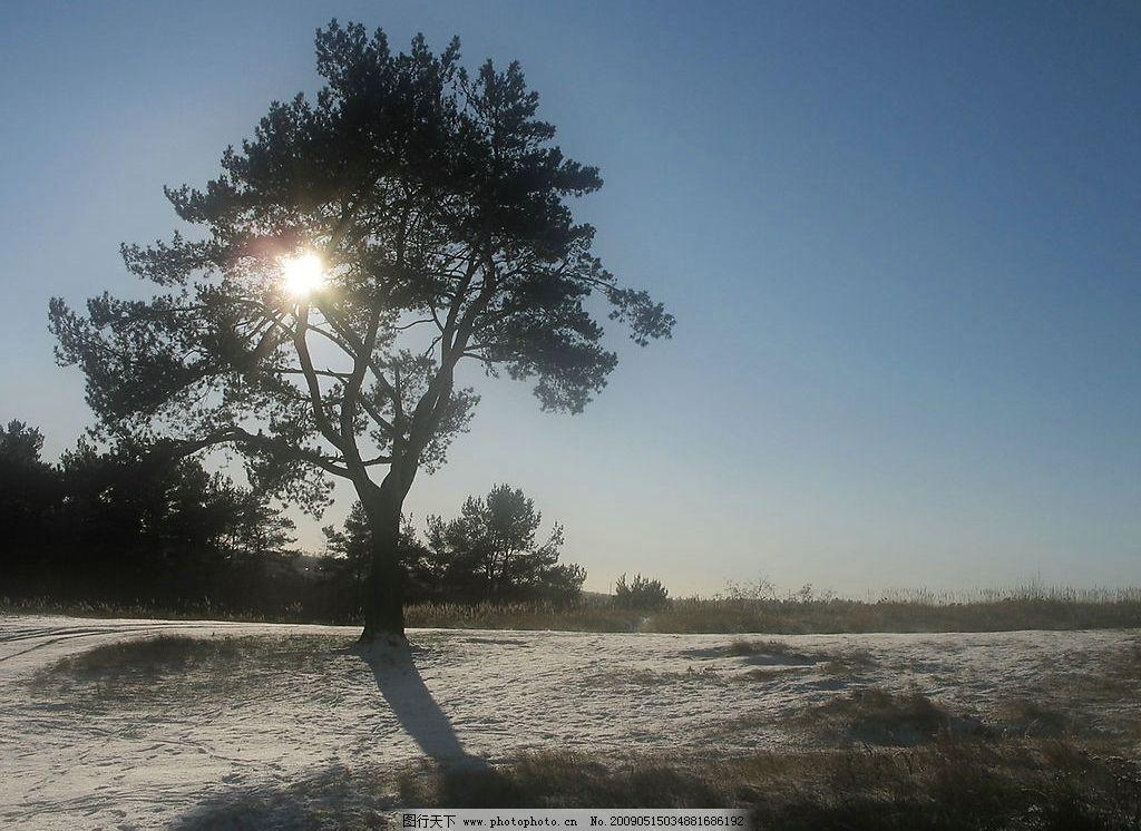 阳光树木 美丽风景 日出 蓝天 白云 云层 天空 树木 景色 人物图库 女