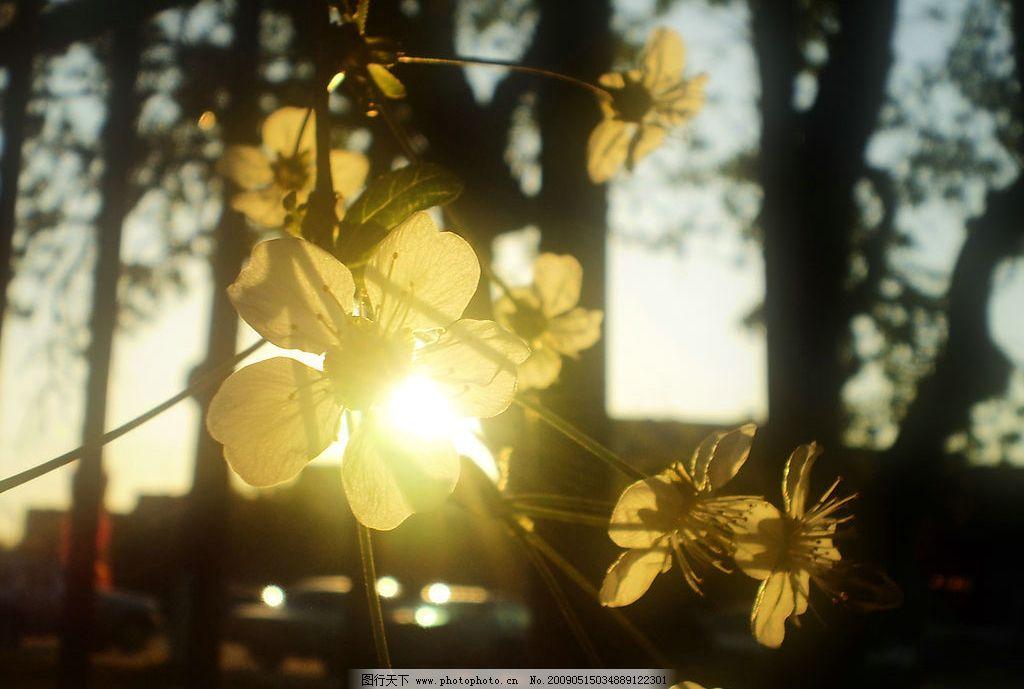 阳光树木 美丽风景 日出 蓝天 白云 云层 天空 树木 人物图库 女性