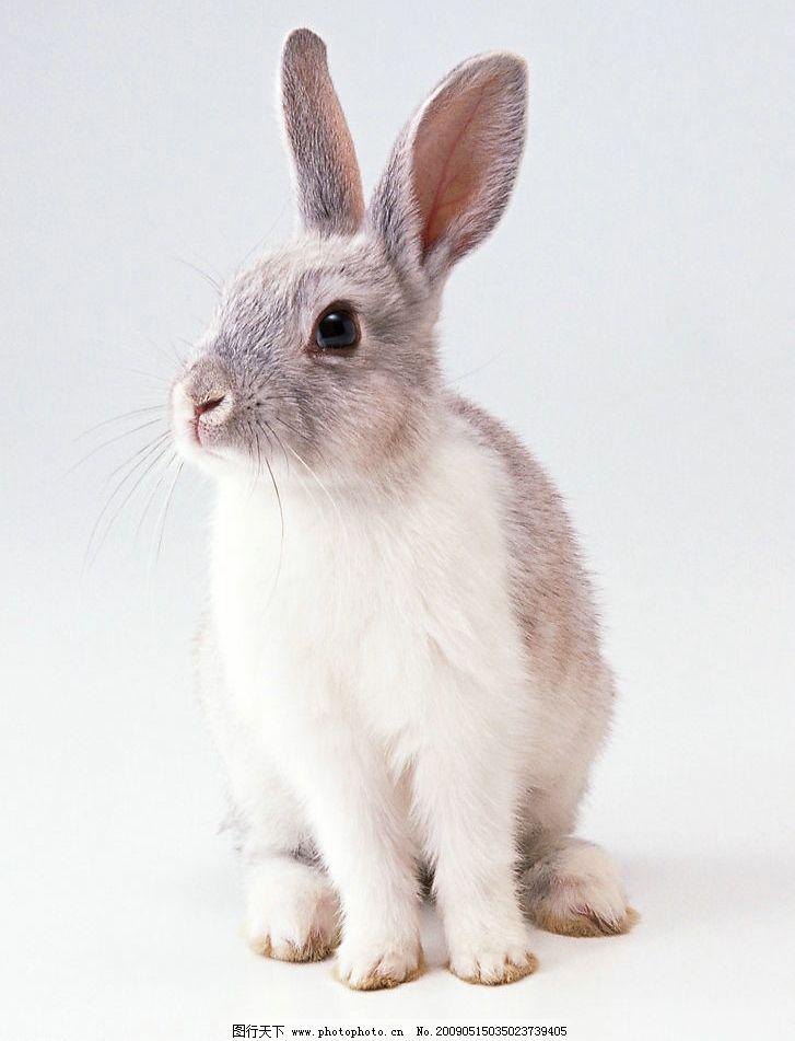 兔子图片_野生动物_生物世界