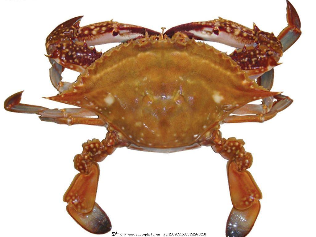 大螃蟹图片