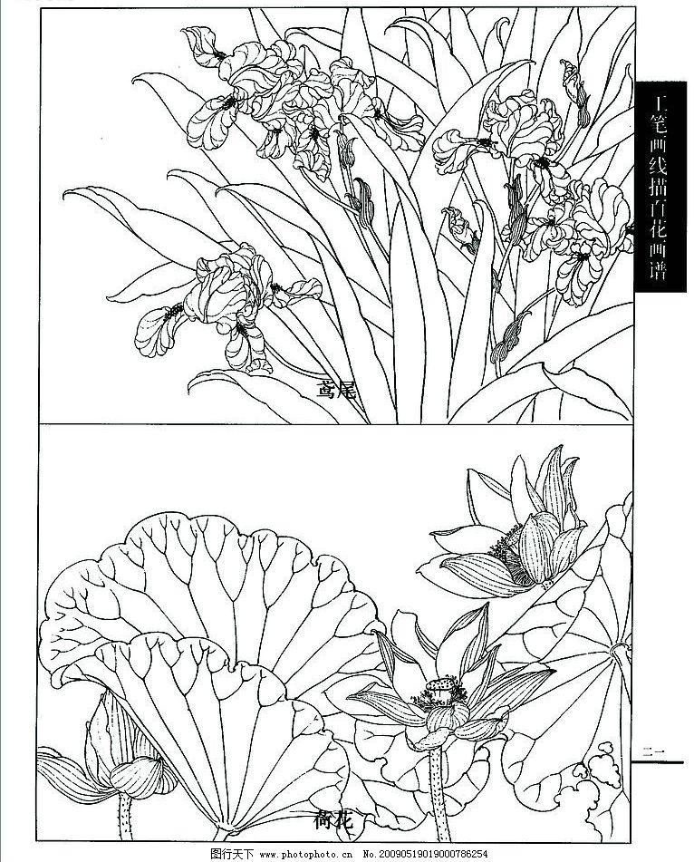 白描 荷花 鸢尾 文化艺术 绘画书法 设计图库 72dpi jpg