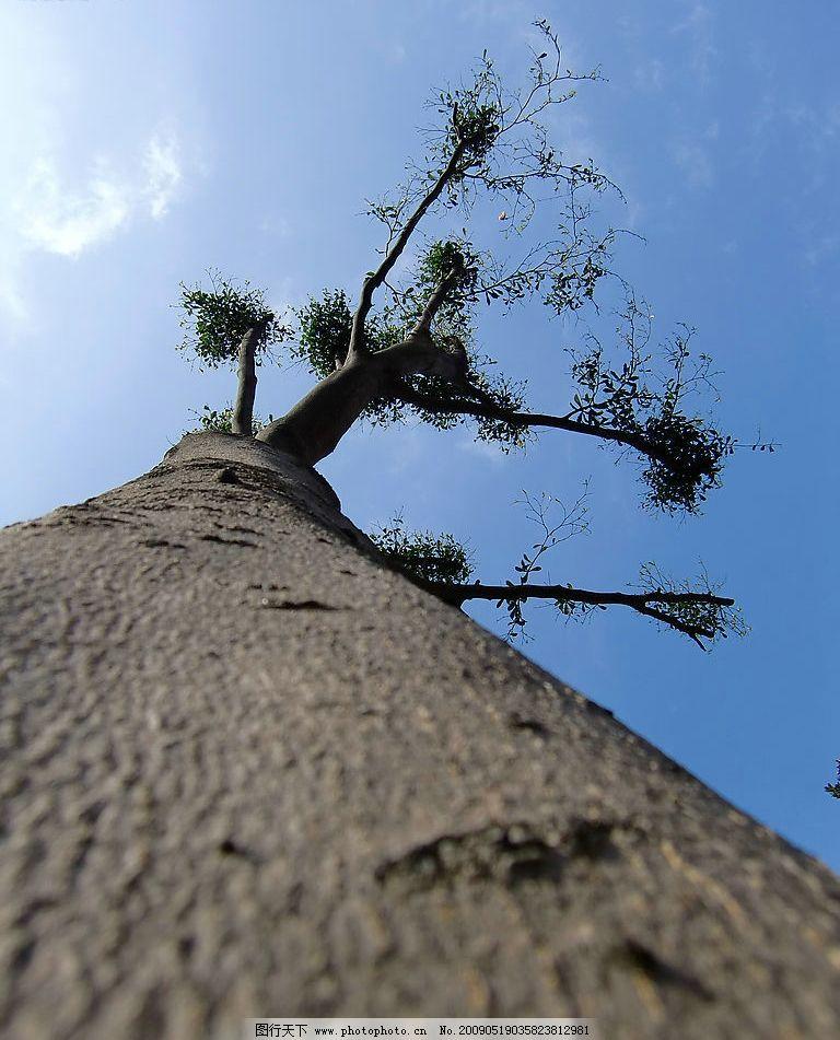 天空之树图片