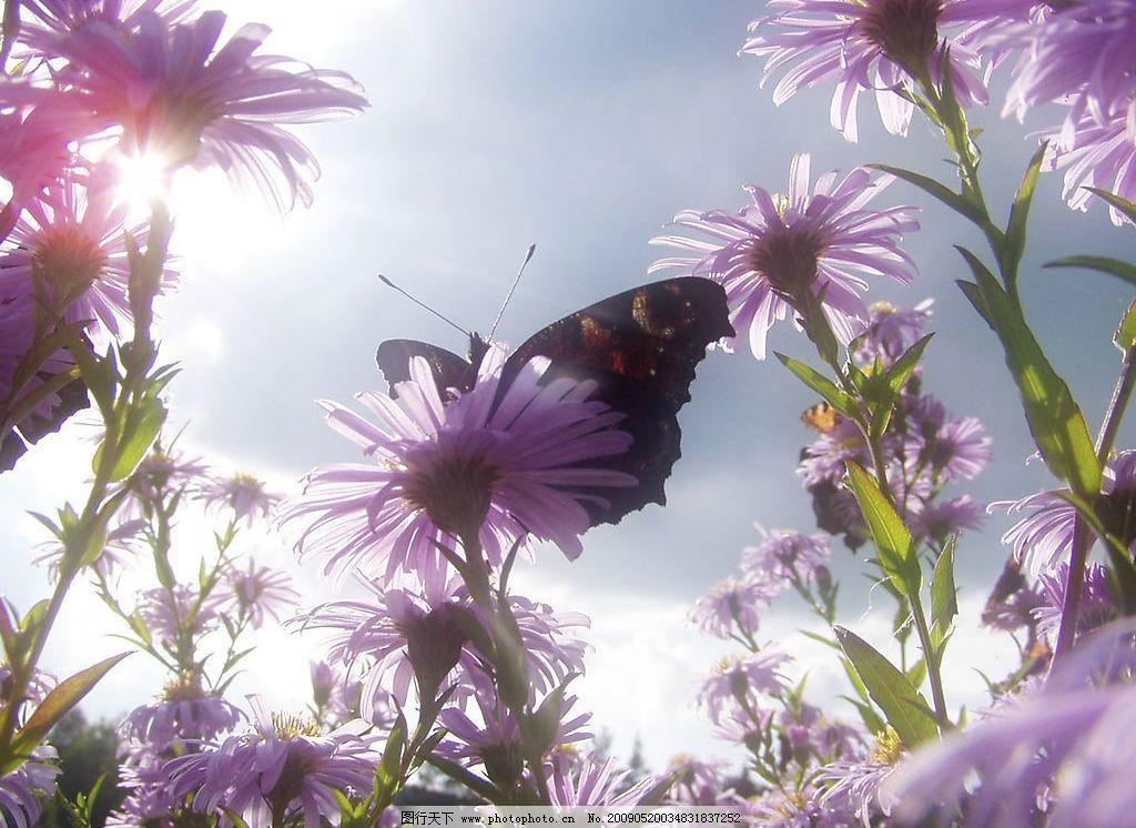 蝴蝶花朵 美丽风景 蓝天 白云 云层 天空 树木 景色 花草 摄影图库