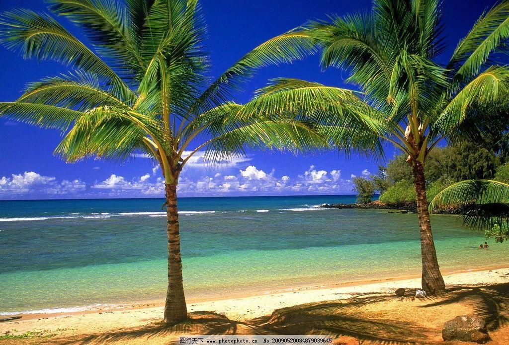 椰子树 椰树 树影 热带 沙滩 海水 碧水 白云 蓝天 海边 自然景观