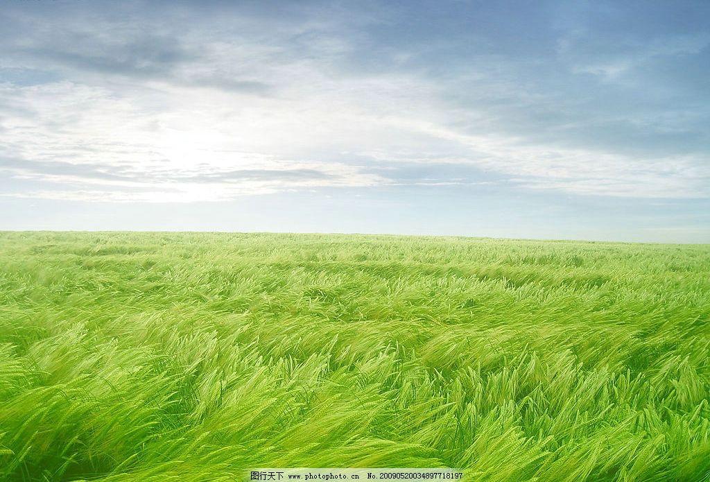草地风景 美丽风景 蓝天 白云 云层 天空 景色 花草 摄影图库图片