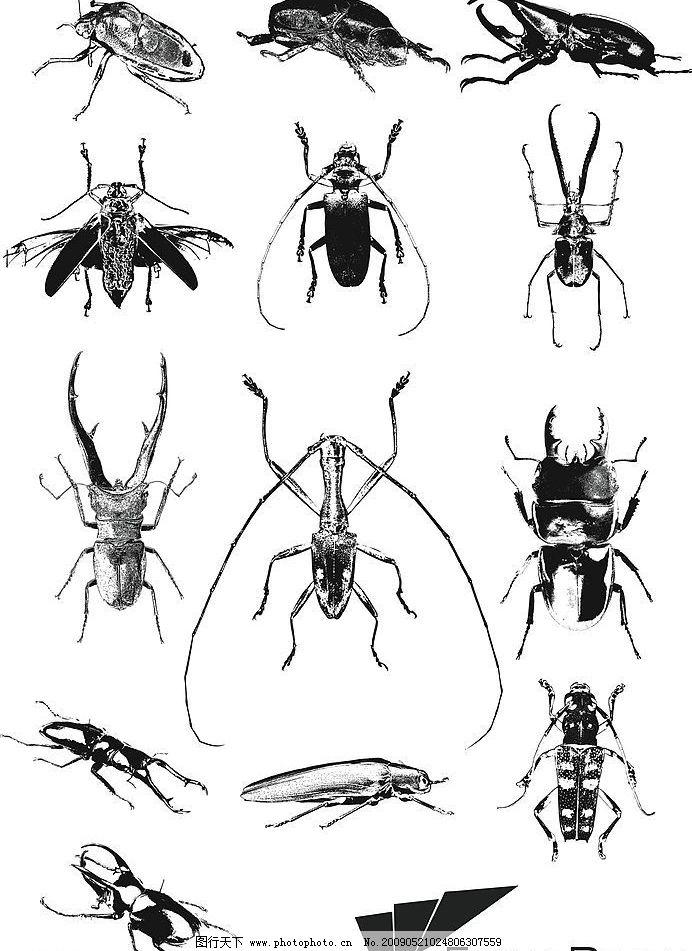 昆虫 爬虫 生物世界 矢量图库 ai