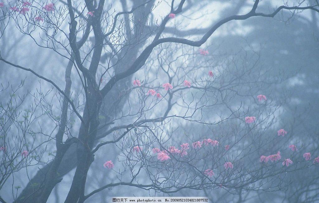 迷离花树 桃花 迷离 诡异 森林 自然景观 自然风景 摄影图库 350dpi