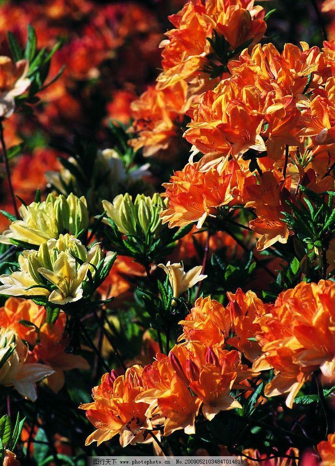 鲜花图片_自然风景_自然景观