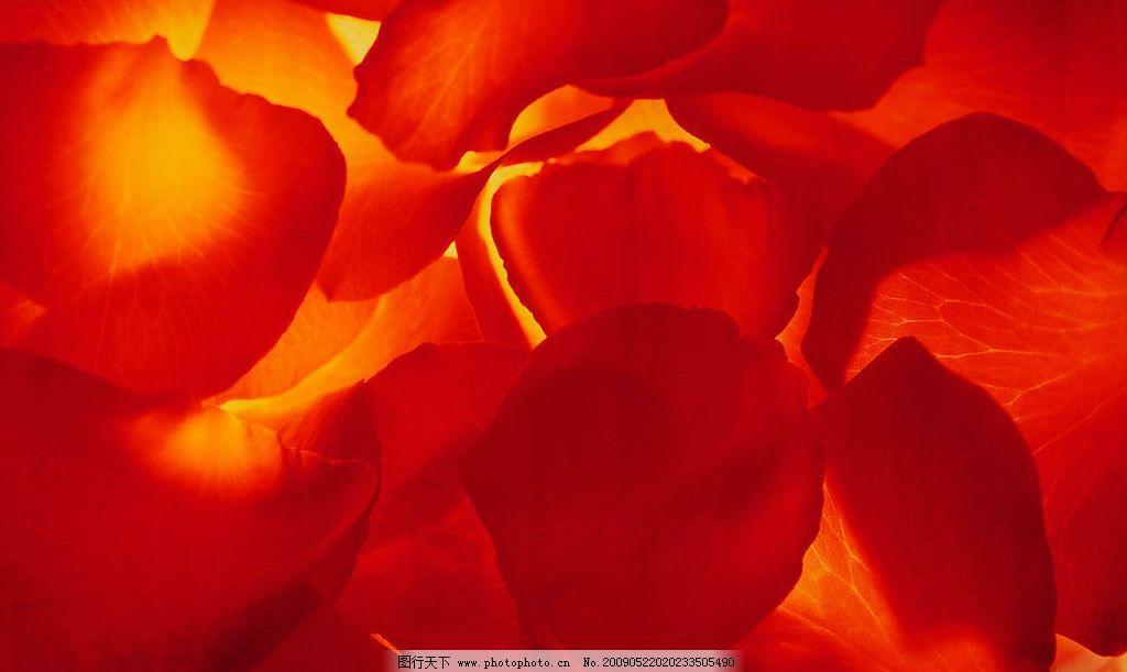 花瓣底纹 精美底纹 花瓣背景 金光红叶 底纹边框 背景底纹