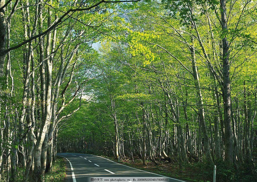 林中路 树林 公路 夏天 风光 自然景观 自然风景 摄影图库 350dpi jpg图片