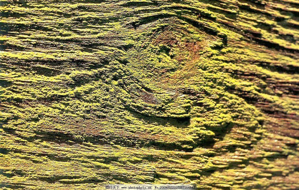 苔藓 纹理 底纹 背景素材 生活百科 生活素材 摄影图库 72dpi jpg