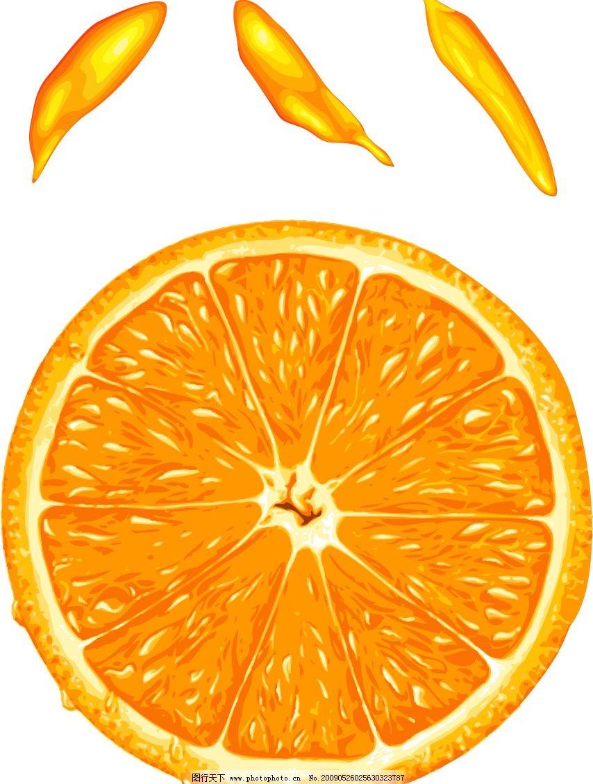 素描橙子正剖面的画法步骤