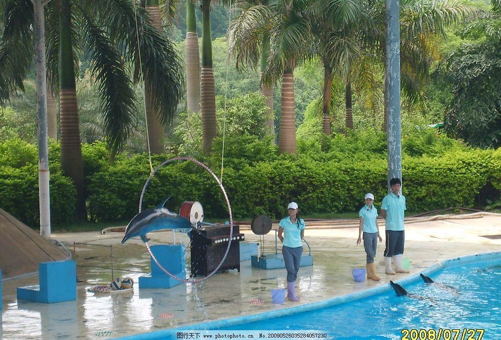海豚跳圈 海豚 海豚表演 动物园 人与海豚 训练海豚 精彩瞬间 抓拍