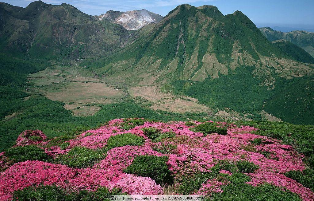 雪山下的花 红花 自然景观 自然风景 摄影图库